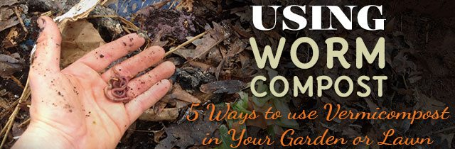 Using-Worm-Compost