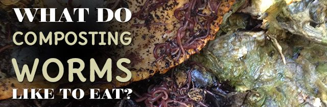 What-Do-Composting-Worms-Like-To-Eat